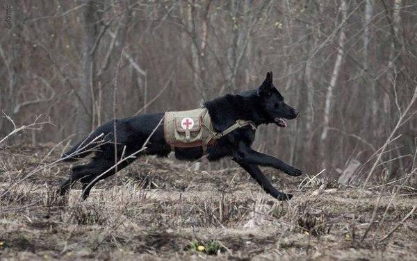 Производство и продажа Жилет для санитарной собаки M3-067-S с доставкой по всему миру